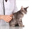 Ветеринарные клиники в Спирово